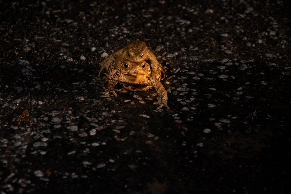 THE WISDOM OF THE TOADS